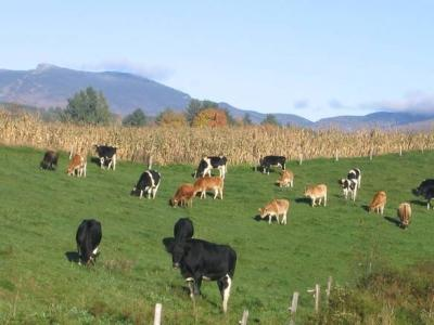 crescatorii-de-animale-vor-tva-redus-in-sectorul-zootehnic