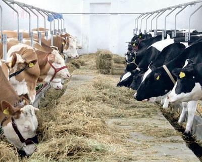 costel-caras-statul-ar-trebui-sa-l-incurajeze-pe-fermierul-mic-sa-renunte-la-lapte-si-sa-se-orienteze-pe-vaca-de-carne