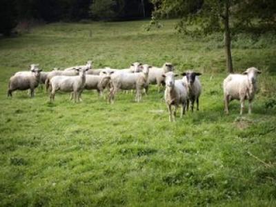 cresterea-ecologica-a-animalelor