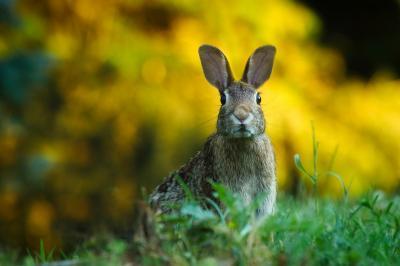cresterea-iepurilor-de-carne-in-microferme-avantaje-dezavantaje-si-costuri