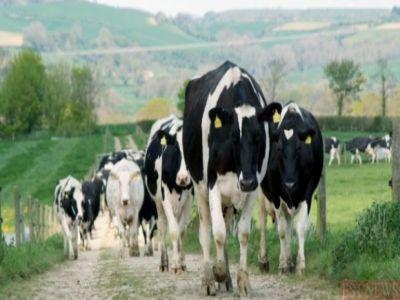 ce-recomanda-medicii-veterinari-pentru-protejarea-animalelor-de-efectele-caniculei