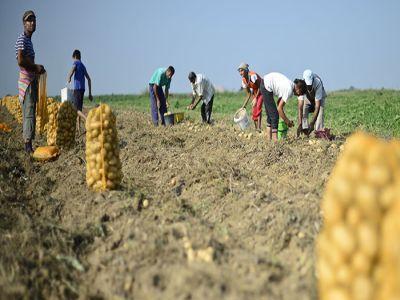 2017-un-an-agricol-mai-slab-pe-ansamblu-dar-mai-bun-pentru-culturile-de-porumb-cartofi-si-sfecla