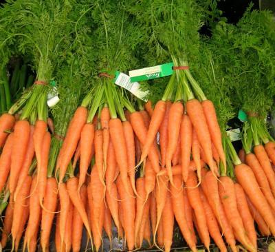 cultura-morcovului-semanatul-morcovilor-se-face-primavara-intre-1-10-martie
