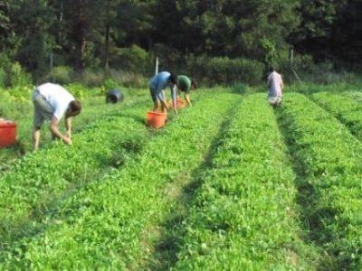 peste-1000-de-fermieri-somati-sa-returneze-subventiile-pentru-agricultura-ecologica