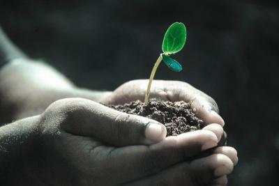 lista-culturilor-energetice-nonagricole-actualizata