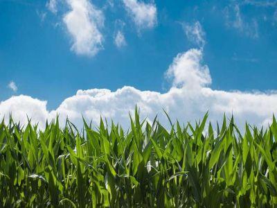 buletin-agrometeorologic-pentru-perioada-22-26-mai