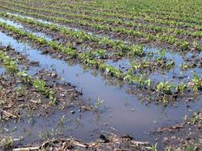 fermierii-afectati-de-calamitati-naturale-anul-trecut-ar-putea-sa-scape-de-impozit