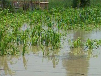 ploile-au-intarziat-desfasurarea-lucrarilor-agricole-in-buzau