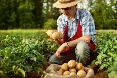 care-este-starea-culturilor-infiintate-in-toamna
