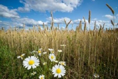 suprafata-cultivata-ecologic-a-romaniei-tot-mai-mare