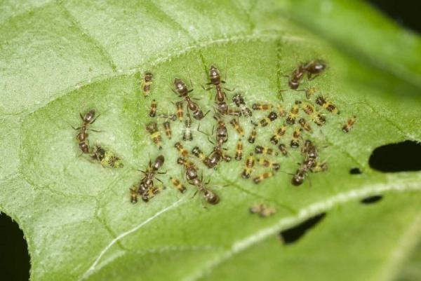 temperaturile-ridicate-si-precipitatiile-scazute-au-adus-daunatori-culturilor-agricole
