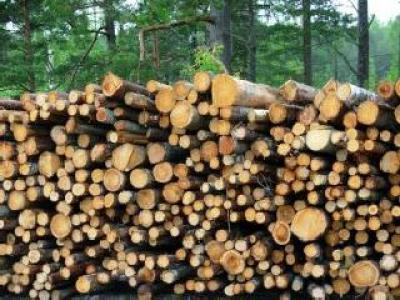 1000-de-hectare-de-padure-au-fost-defrisate-ilegal-in-judetul-cluj