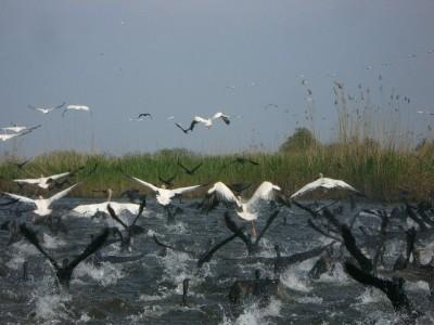 in-2012-au-fost-capturate-oficial-circa-2300-tone-de-peste-in-delta-dunarii
