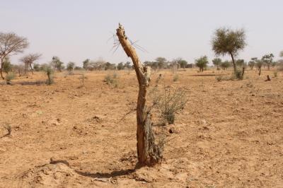 romania-una-dintre-tarile-ue-cele-mai-afectate-de-desertificare