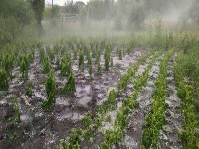 peste-71-milioane-de-euro-pentru-reducerea-efectelor-dezastrelor-naturale-si-asigurarea-productiei-agricole