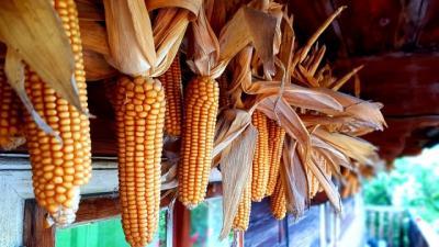 romania-exporta-mai-multe-cereale-in-2019