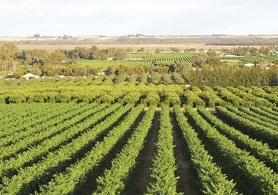 subventii-2013-cererile-pentru-subventia-acordata-in-agricultura-ecologica-se-depun-pana-pe-29-noiembrie