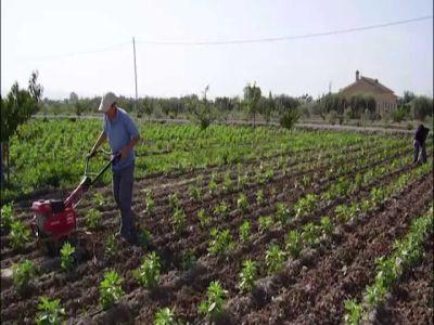 scade-preocuparea-fermierilor-romani-pentru-agricultura-ecologica