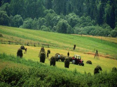au-fost-aprobate-ajutoarele-de-minimis-pentru-sectorul-agriculturii-ecologice