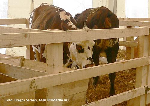 international-cererea-de-lapte-imbuteliat-sustinuta-de-cresterea-urbanizarii-in-tarile-asiatice