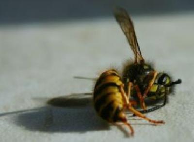 pesticidele-cu-neonicotinoide-nu-sunt-singurele-toxice