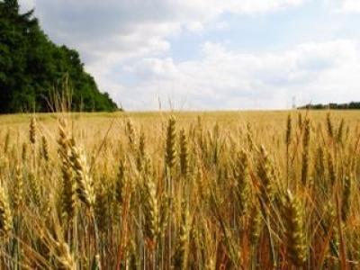 participa-si-tu-la-evenimentul-focus-on-agriculture