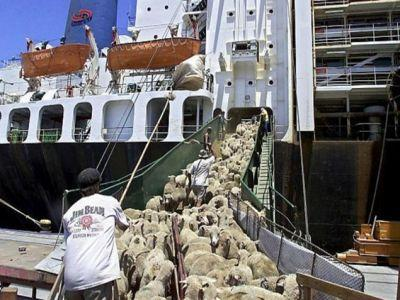 romania-acuzata-ca-incalca-legislatia-europeana-cu-privire-la-exportul-de-animale-vii