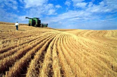 am-produs-mai-putine-cereale-dar-am-exportat-mai-mult