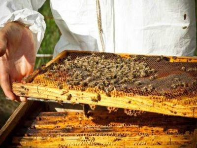 care-sunt-cei-mai-mari-dusmani-naturali-ai-stupilor-de-albine-si-cum-pot-fi-combatuti