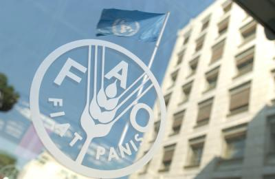 expertii-fao-spun-ca-pretul-alimentelor-a-scazut-in-luna-noiembrie-pe-plan-mondial
