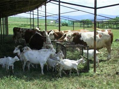 efecte-negative-ale-excesului-de-proteine-la-animalele-domestice