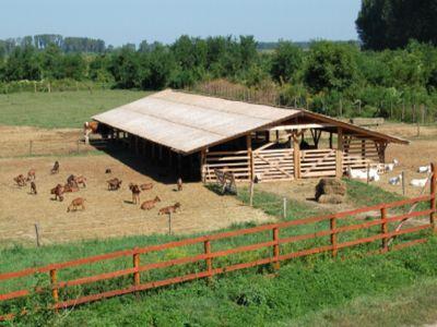 proiecte-eligibile-pentru-obtinerea-de-finantari-in-sectorul-agricol