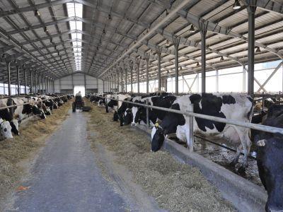 fonduri-europene-accesibile-pentru-fermierii-care-doresc-sa-infiinteze-o-exploatatie-zootehnica