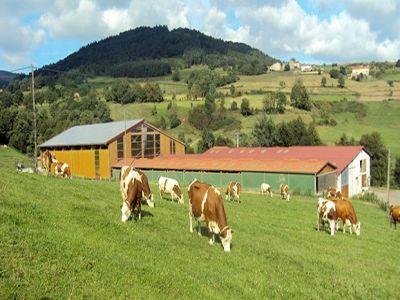 o-treime-din-gospodariile-agricole-din-uniunea-europeana-sunt-in-romania