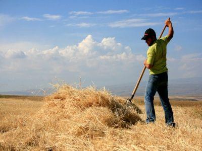 solicitari-de-256-milioane-de-euro-pentru-dezvoltarea-fermelor-mici-prin-pndr-2020