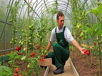 etapele-instalarii-tinerilor-fermieri-in-vederea-obtinerii-de-fonduri-nerambursabile