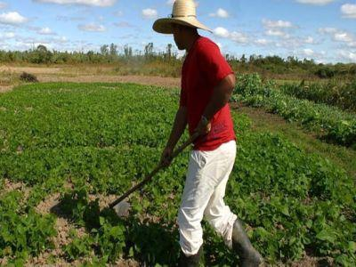 Ce contine ghidul solicitantului pentru tinerii fermieri