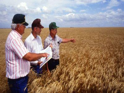 peste-90-dintre-fermierii-romani-sunt-trecuti-de-40-de-ani