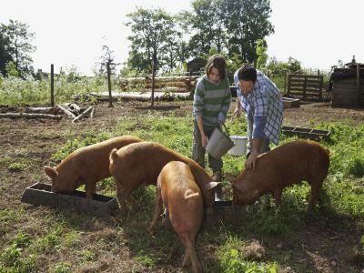 ce-trebuie-sa-stie-tinerii-fermieri-care-vor-sa-acceseze-fonduri-prin-pndr