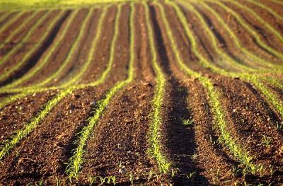 cum-sporim-fertilitatea-solului