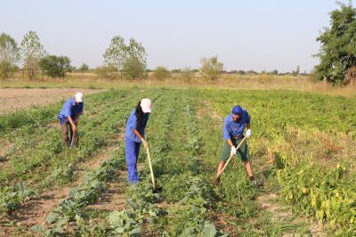 aac-agricultura-trebuie-declarata-sector-strategic-de-siguranta-nationala