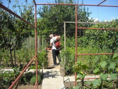 ce-tratamente-fitosanitare-se-aplica-in-culturile-de-legume