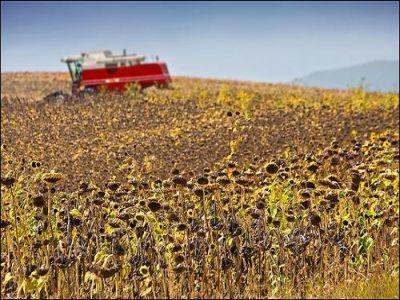 fermierii-au-inceput-mai-devreme-lucrarile-de-recoltare-la-floarea-soarelui