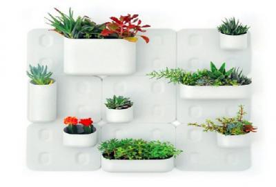 cresterea-florilor-de-apartament-de-la-simplu-hobby-la-afaceri-profitabile
