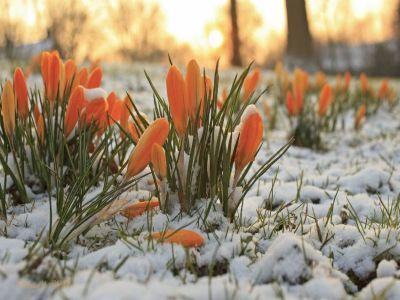 ce-flori-de-gradina-rezista-cel-mai-bine-in-sezonul-rece