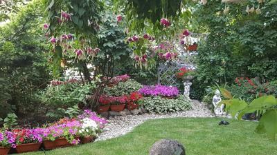 flori-care-pot-fi-plantate-vara