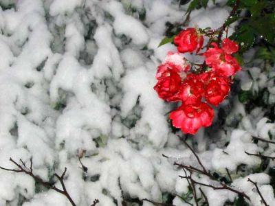 care-sunt-florile-de-gradina-care-rezista-cel-mai-bine-pe-timpul-iernii