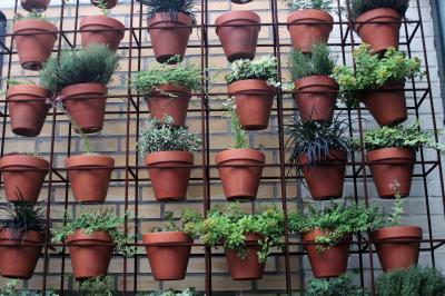 cum-poti-avea-propria-sera-de-legume-chiar-pe-balcon