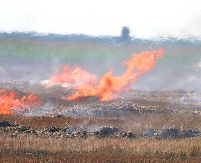 agricultorii-care-dau-foc-miristilor-risca-sanctiuni-din-partea-apia