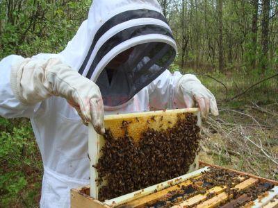 fonduri-majorate-in-cadrul-programului-national-apicol